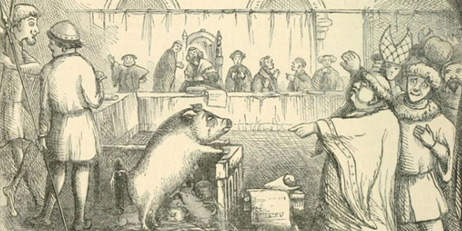 Processo ad un maiale