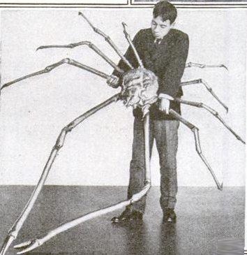 Granchio Gigante Del Giappone