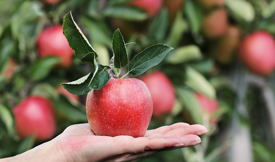 Mela Rossa Giardino Eden Adamo Eva
